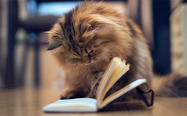 Кошка читает книгу